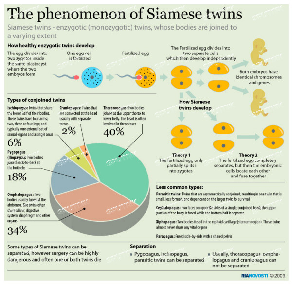 business law report on siamese twins
